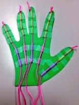 Skeletal System: Model of hand