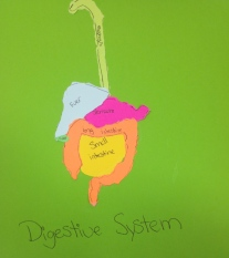 Digestive System: Artwork creation